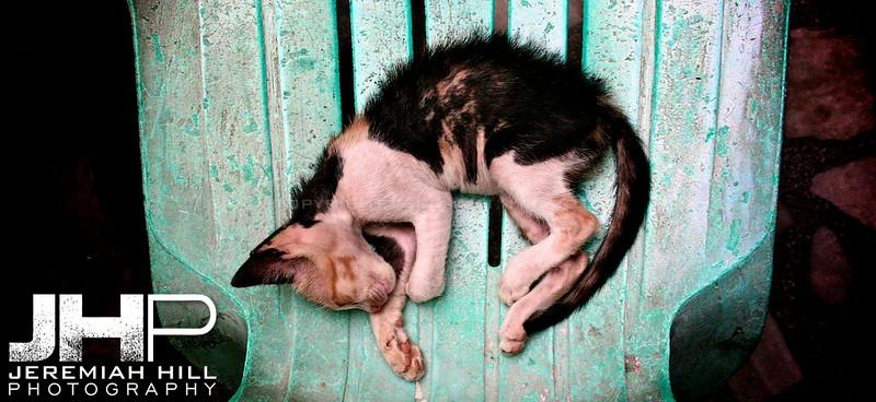 """""""Curled Cat"""", Agra, Uttar Pradesh, India, 2007 Print IND385-087"""