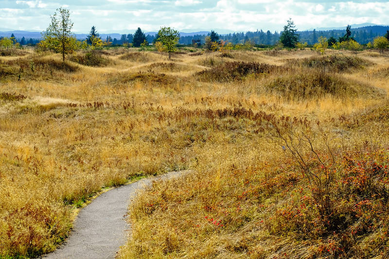 Mima Mounds on the Thurston Bountiful Byway