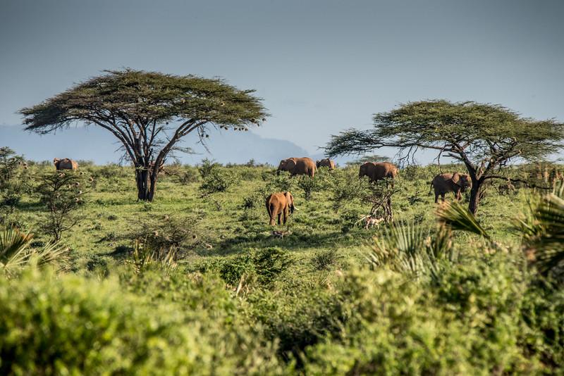 Samburu (2 of 70).jpg
