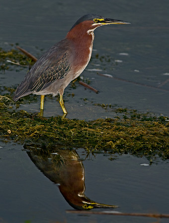 Viera Wetlands - July 10, 2009