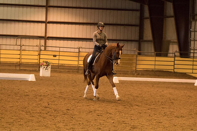 Horse 656