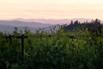Napa Valley Spring and Summer 2021