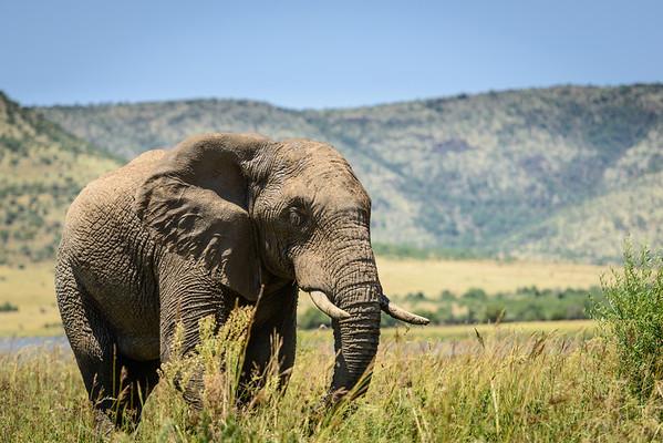 Pilanesberg 2013