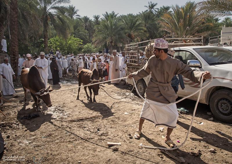 Traditional market (64)- Oman.jpg