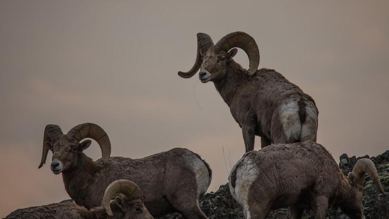Rams Malaga-3.jpg