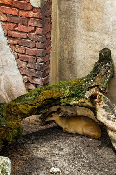 R_Tampa_Zoo-189-Edit.jpg