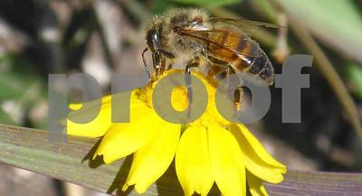 time-for-texas-second-annual-pollinator-bioblitz