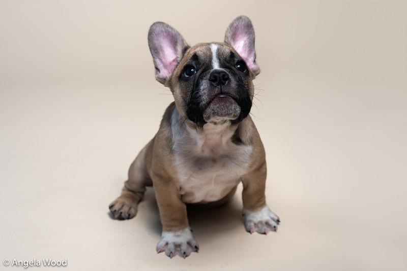 Puppies65.jpg