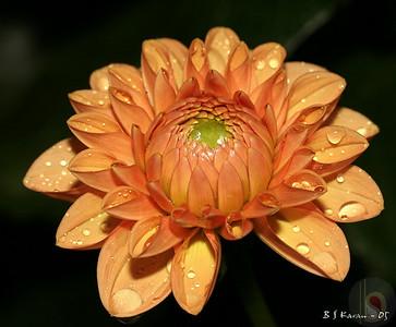 Flowers @ Night