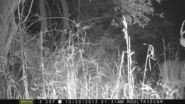 trail cam photos