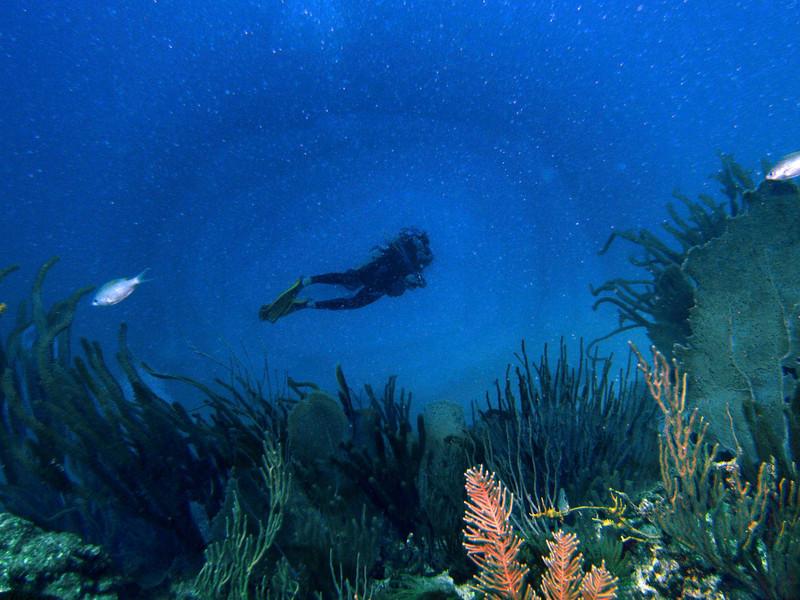 Lone Diver