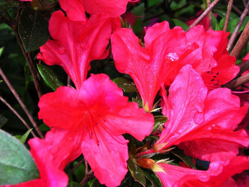 carolina flower 105.jpg