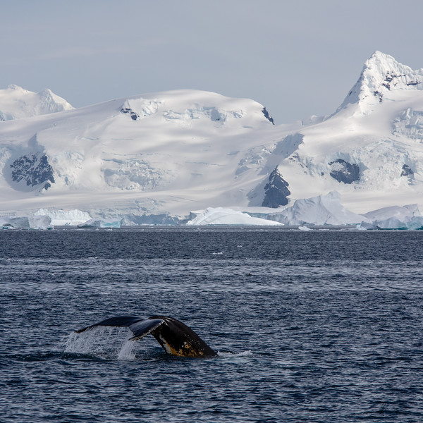 2019_01_Antarktis_03643.jpg