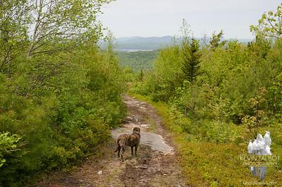 Moose Mountain 5-31-19