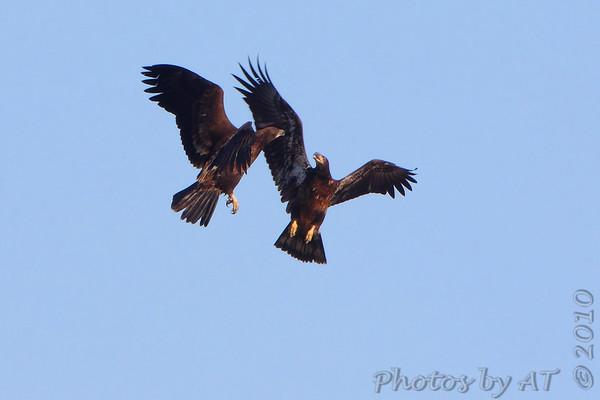 2010-03-03 Riverlands Migratory Bird Sanctuary