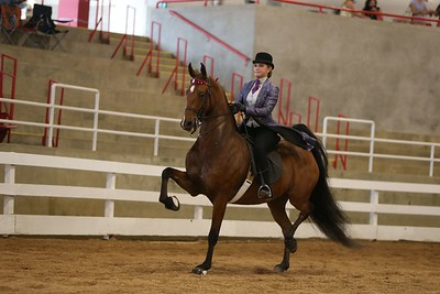 27. Five-Gaited Pony (moved from Friday am)
