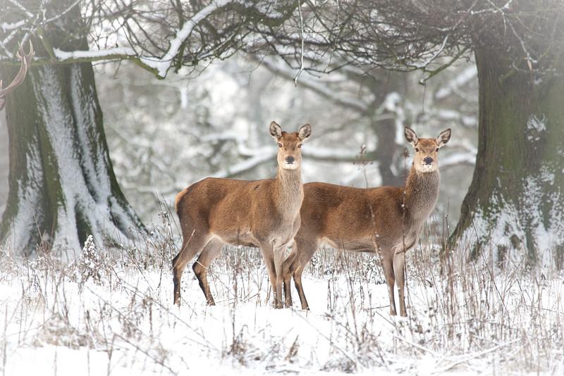 Deer website-6.jpg