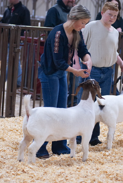kay_county_showdown_goats_20191207-200.jpg