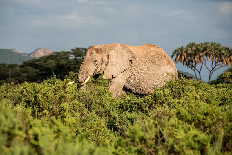 Samburu (32 of 70).jpg