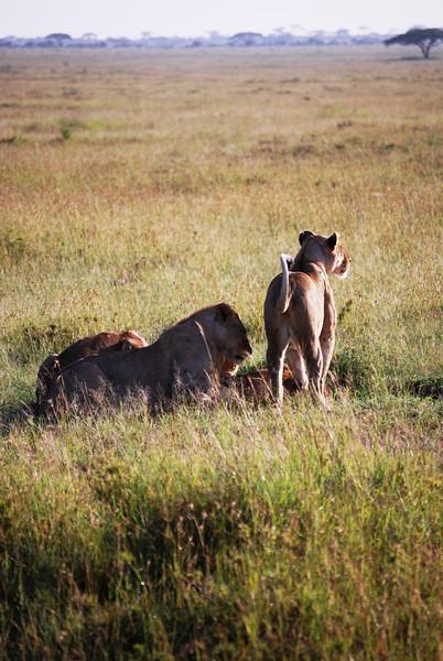 Serengeti (101).JPG