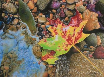 """Current Resident"" (colored pencil) by Pamela Clements"