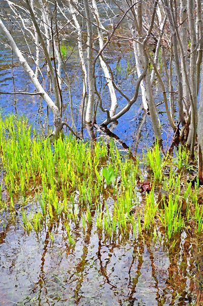 water grass 11-26-2011.jpg