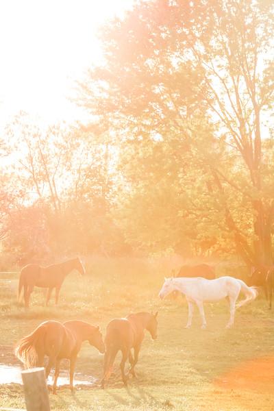 HorseSun1.jpg