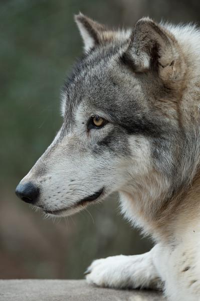 Seacrest Wolves_-9.jpg