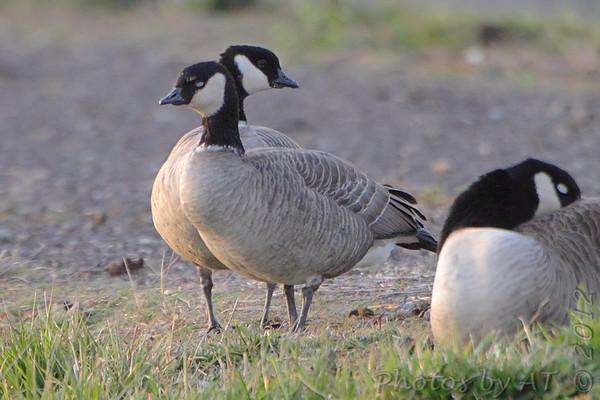 2012-11-29 Riverlands Migratory Bird Sanctuary