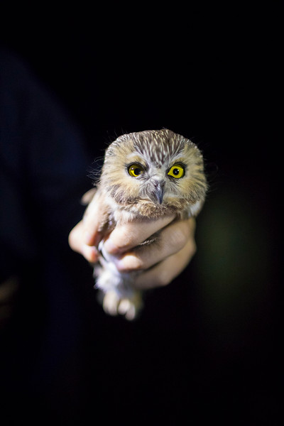CIK-181012-Owls-API_6494.jpg