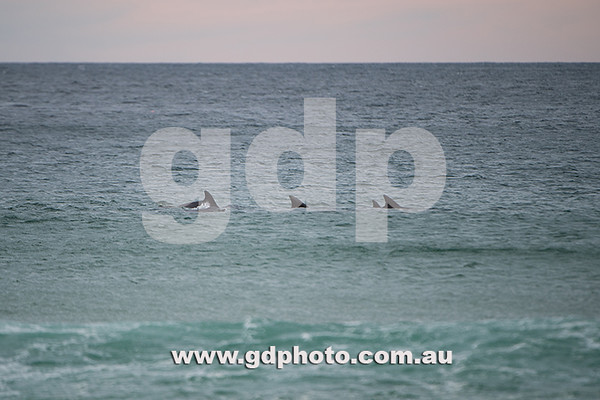 Surfing NSW Rip Curl Gromsearch Day 1
