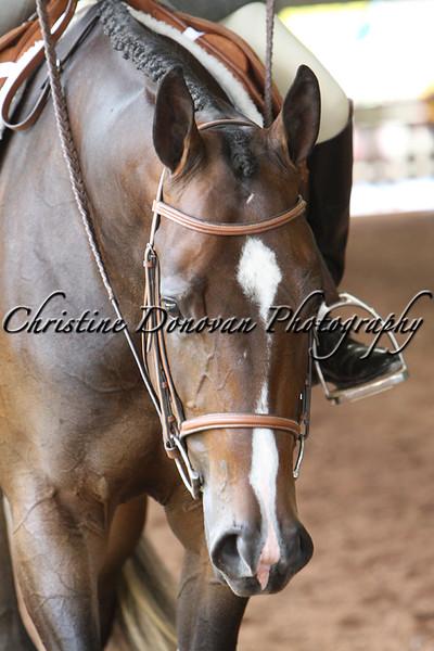 Amateur Hunter Under Saddle