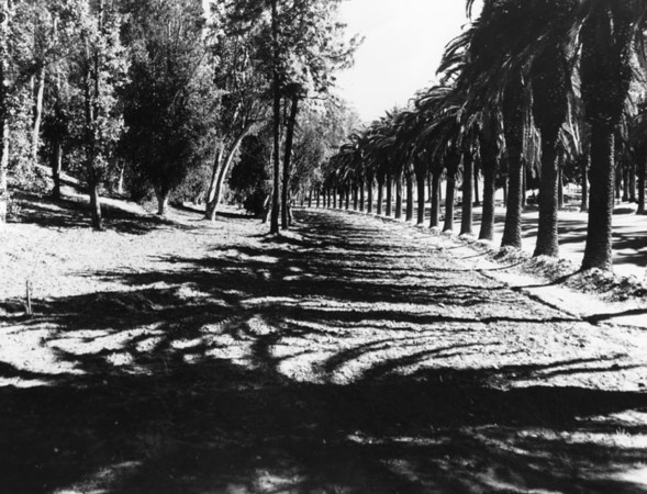 1950, Row of Palms