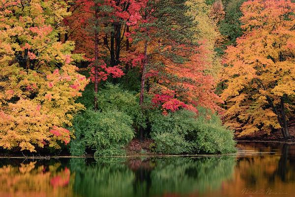Durand Eastman Park in Autumn #1
