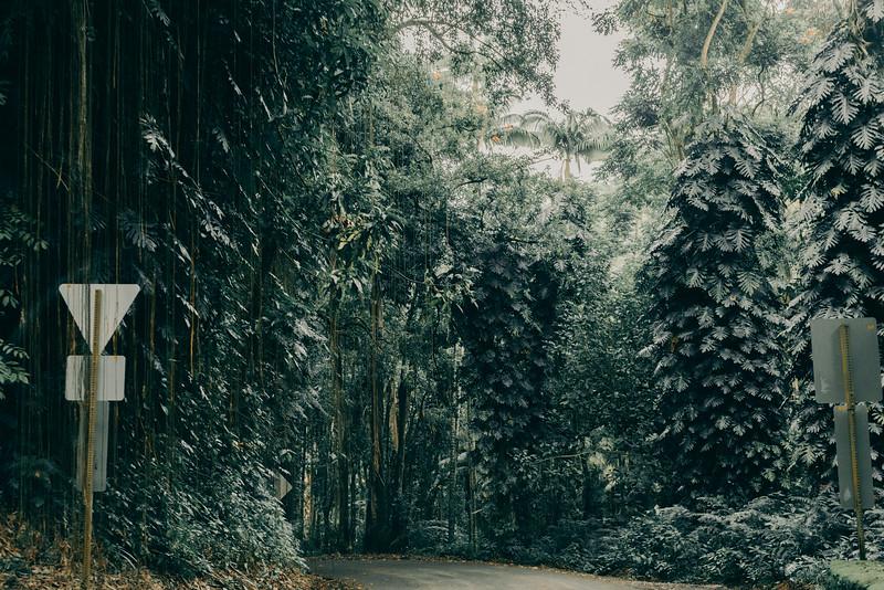 Hawaii20-368.jpg