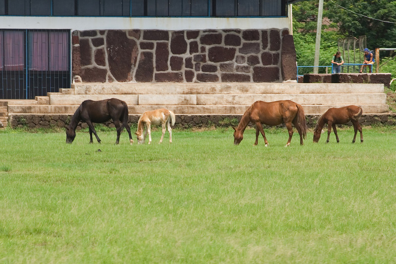 Easter Island Horses 2.jpg