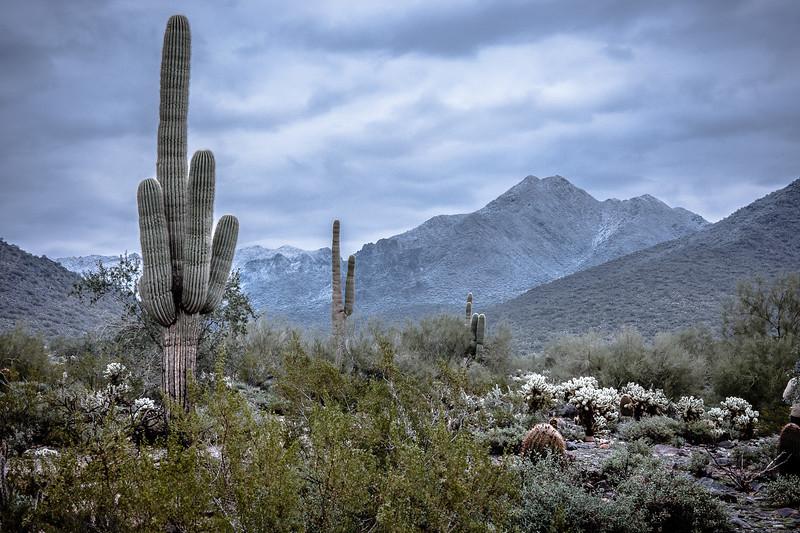 New Years Cactus-7583.jpg