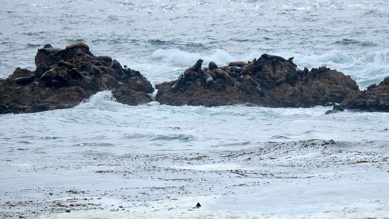 California Day 3 Monterey 05-29-2017 110.JPG