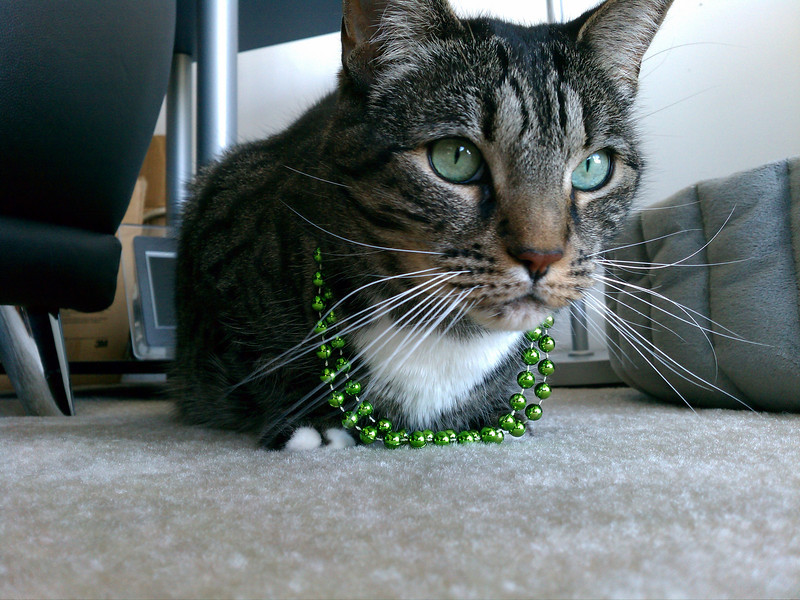 Roxie with beads