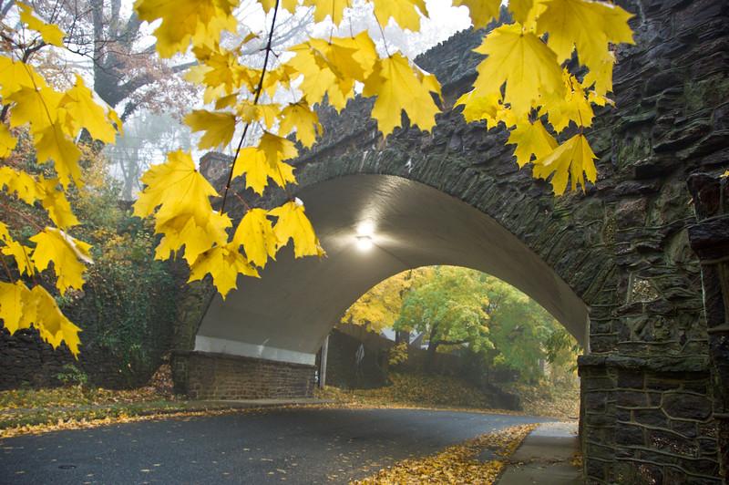 20071126 Leaves 18.jpg