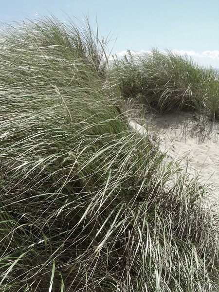 Au-Natural Grasses