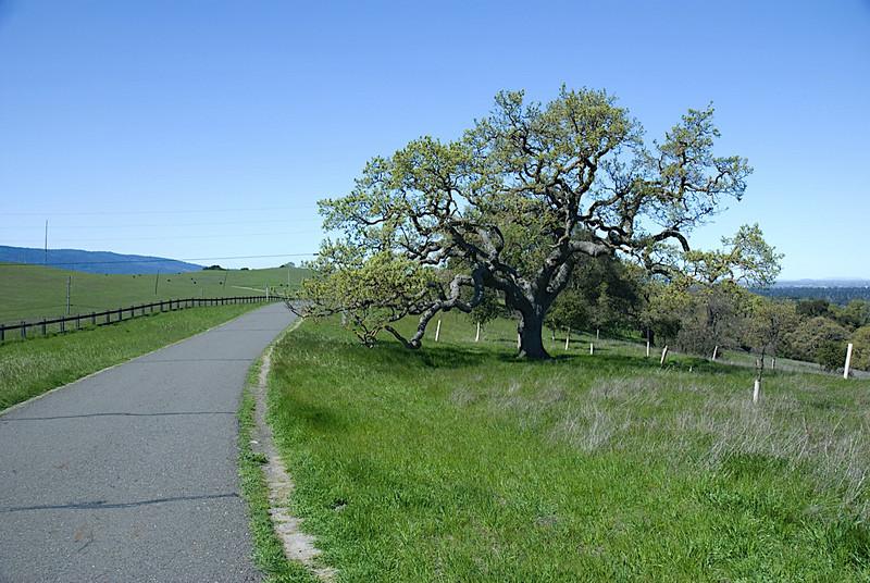 Stanford Dish Hike (2008-03-16)