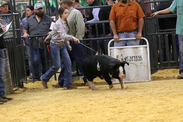 Swine-OPB