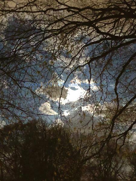 Sky Moon Tree.jpg