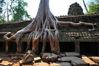 Roots, Taprom, Siem Reap