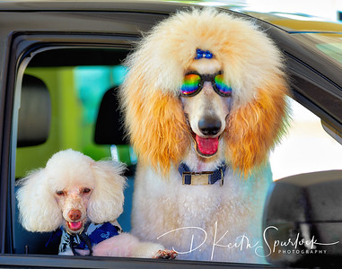 Canine Fim Festival Events