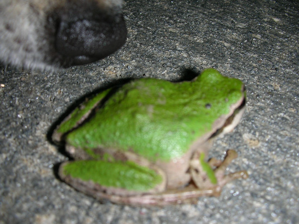 06-10-20 a Frog