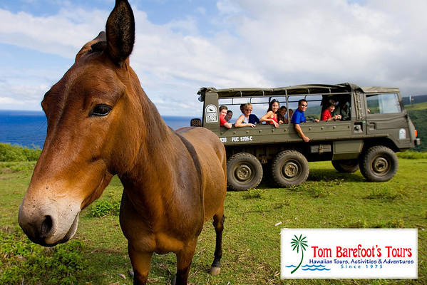 Hiking Tours on Hawaii