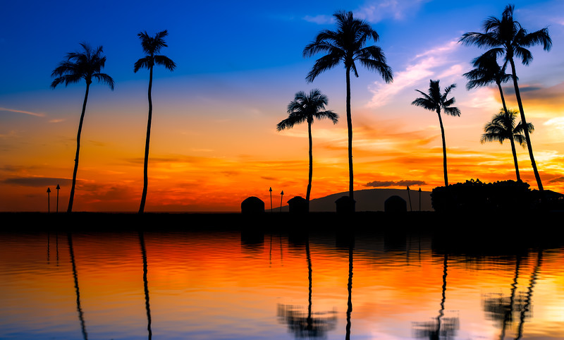 blue orange sunset with palm trees