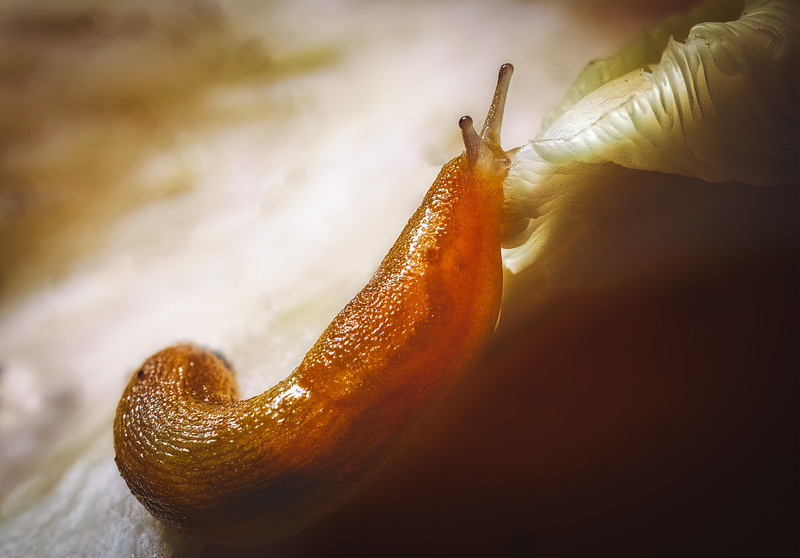 Carl Simmerman Slug 02.jpg
